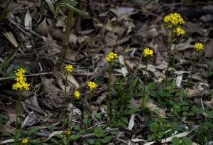 DSC 6718 0078.crop
